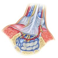 Transverse Carpal Ligament Pain